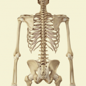 Spinal Osteoporosis